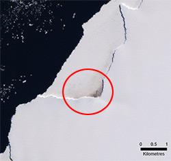 Tracce di guano lasciate da una colonia di pinguini (Credit: British Antarctic Survey)